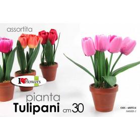 PIANTINA TULIPANI ASS 30CM